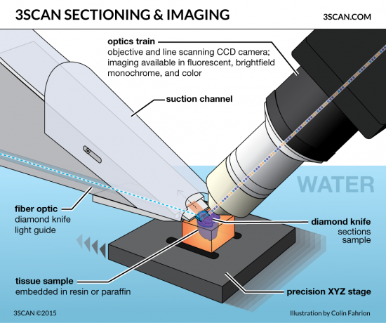 3SCAN-sectioning-and-imaging-v5